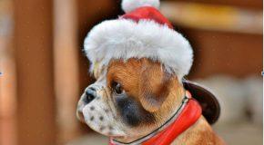 [Quiz] Consommation responsable : êtes-vous prêt à fêter Noël de manière durable ?